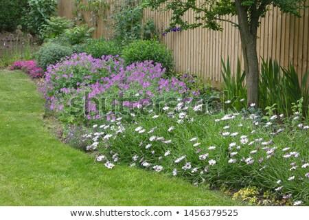 Flowerbed with geranium flowers Stock photo © Julietphotography
