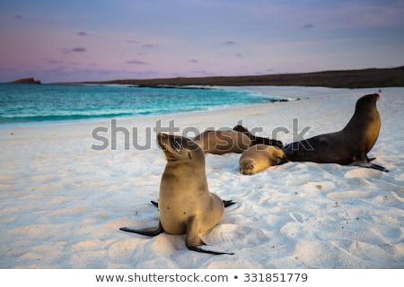 アシカ · 島々 · 海岸 · 自然 · シール · ソフト - ストックフォト © pxhidalgo