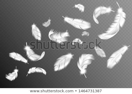 Gyűjtemény tollak közelkép madár madarak zsákmány Stock fotó © TheFull360