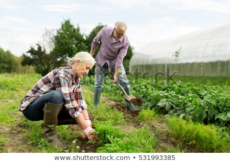 Man working in country garden Stock photo © monkey_business