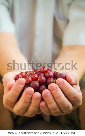 Stock photo: Male hands holding fresh air gooseberry fruit