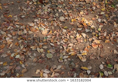 texture of green soil and dry leaf Stock photo © yanukit