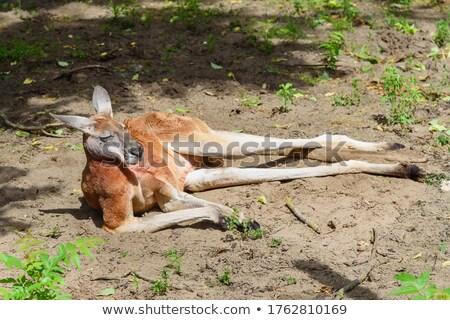 Kanguru poz gibi insan komik açık Stok fotoğraf © Smileus