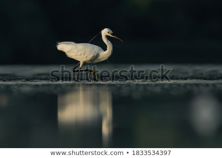 Stock photo: Black little lake, Czech Republic