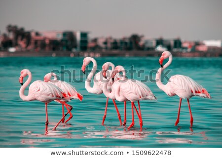 tropical beach with a flamingo looking for food stock photo © sportactive
