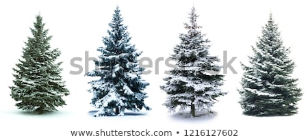 Stock photo: fir-tree in the winter