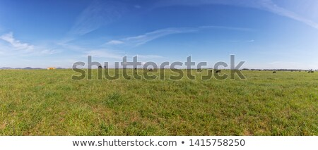 inekler · kuru · alan · gökyüzü · çim · manzara - stok fotoğraf © compuinfoto