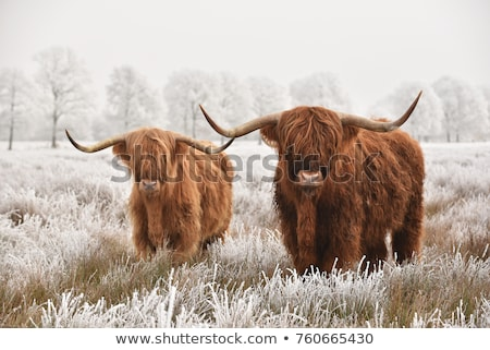 Wild animals in the field Stock photo © bluering