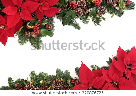 Bright Christmas card with ivy leaves Stock photo © marimorena