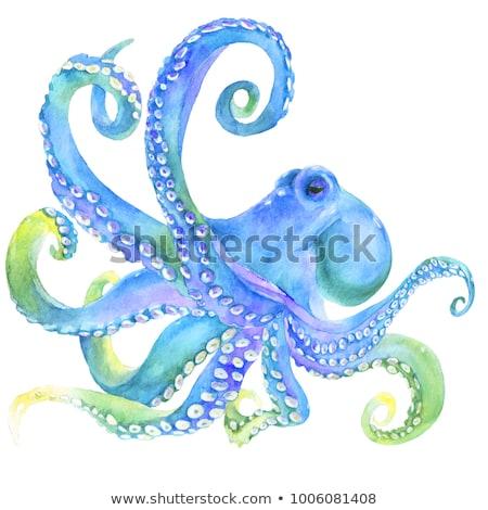 Rose squid illustration blanche eau nature Photo stock © ConceptCafe