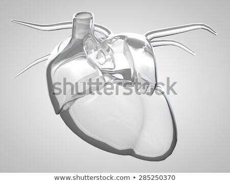 心臓病学 · 心臓血管の · 中心 · 人間 · 血液 · 健康 - ストックフォト © tussik