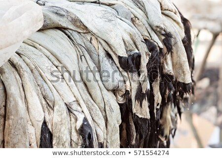 Leather drying in a Moroccan tannery Stock photo © johnnychaos