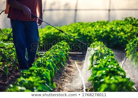 Uomo serra impianti giardino impianto piedi Foto d'archivio © IS2