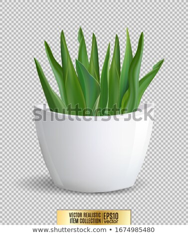 Flores vaso transparente planta grama branco Foto stock © romvo