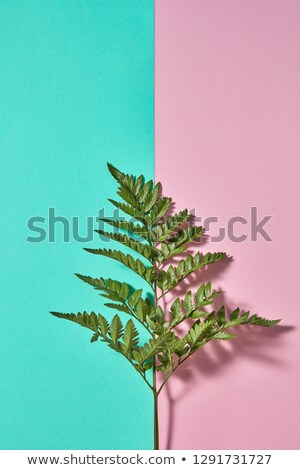 Fresh branch of fern on a double pink-green background with space for text. Natural background for p Stock photo © artjazz