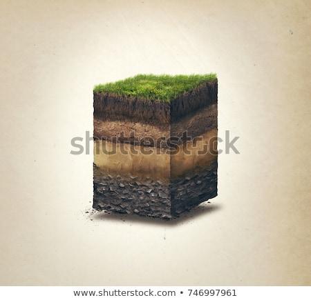 camada · solo · ilustração · textura · árvore - foto stock © lenm