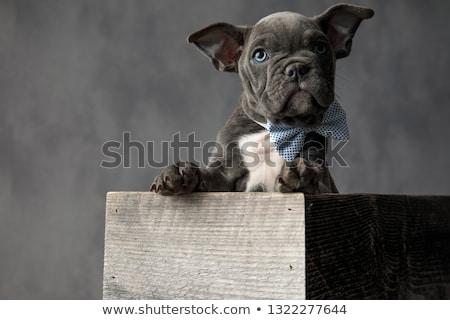 Curioso pequeño cachorro sesión cuadro Foto stock © feedough