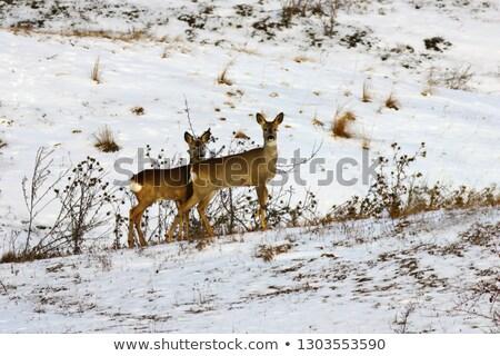 Kettő kíváncsi ikra tél nap család Stock fotó © taviphoto