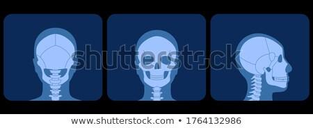 ver · de · volta · retrato · homem · isolado · branco - foto stock © monkey_business