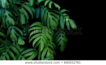 Stock photo: Abstract tropical foliage, wild jungle rainforest background.