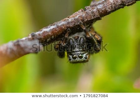 Aranha natureza cena ilustração água projeto Foto stock © colematt