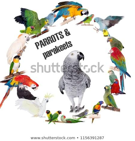 Verschillend papegaaien ingesteld tropische veer dierentuin Stockfoto © netkov1