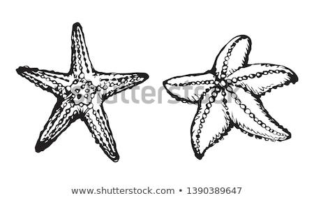 Top view cinque starfish nero copia spazio Foto d'archivio © marylooo