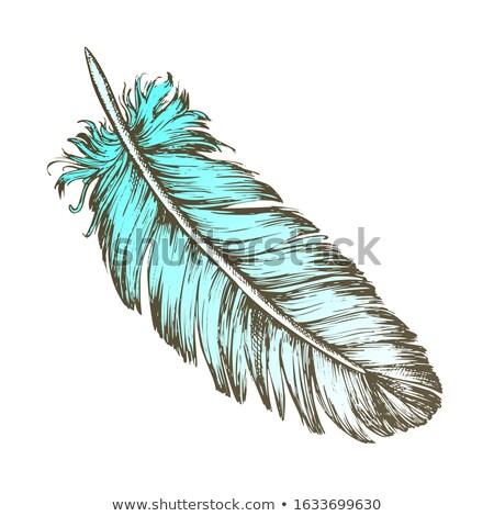 потеряли птица внешний элемент Перу рисованной Сток-фото © pikepicture
