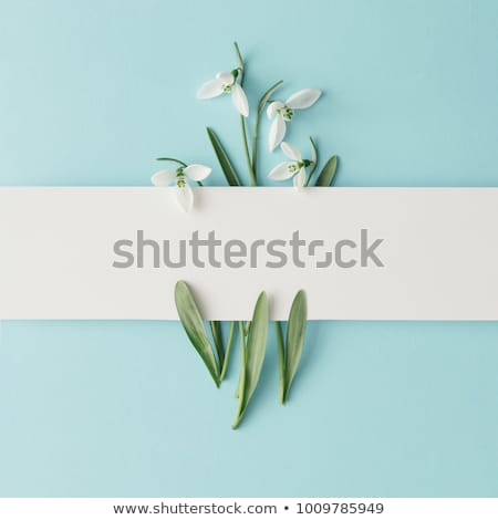 snowdrop spring white flower stock photo © vapi
