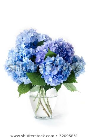 Kwiat szkła Wazon różowy Zdjęcia stock © dashapetrenko