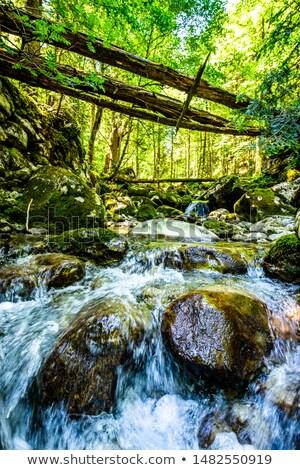 Cascade of Sibli-Wasserfall. Rottach-Egern, Bavaria,  Germany Stock photo © dmitry_rukhlenko