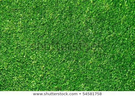Real grama verde grama esportes paisagem futebol Foto stock © Suriyaphoto