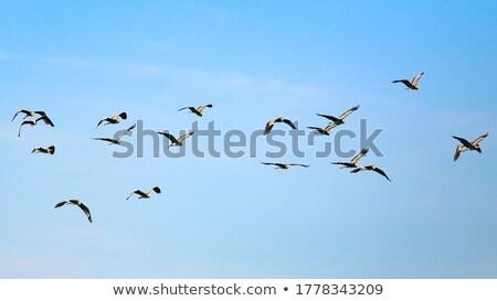 Flying in the sky Stock photo © leeser