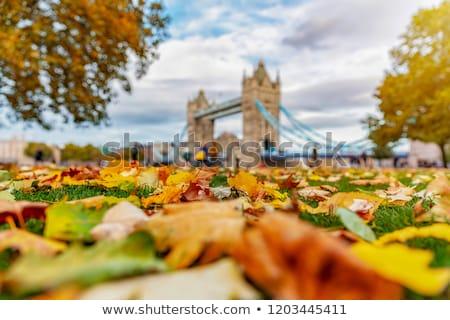 Turm · Westminster · Palast · London · Großbritannien · Stadt - stock foto © capturelight