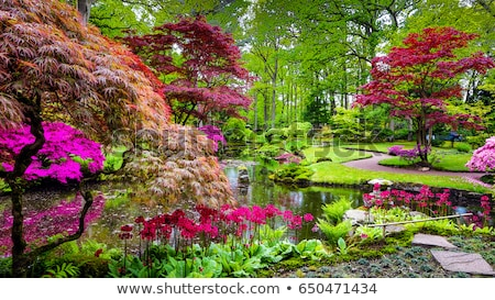 Japon bahçe gölet çiçekli köprü Stok fotoğraf © gardensymphony