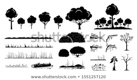 Naturales ondulado hojas largo hierba brillante Foto stock © bobbigmac
