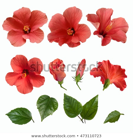 Ardiente flor rojo amor resumen textura Foto stock © Artida