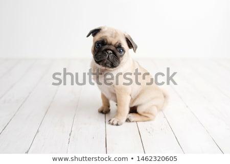 Foto stock: Cachorro · branco · bebê · fundo · ver · veja