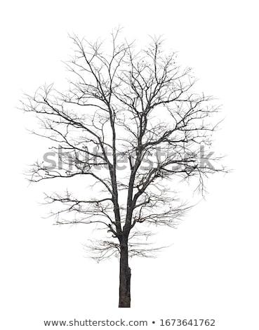 черно белые дерево иллюстрация аннотация Сток-фото © BarbaRie