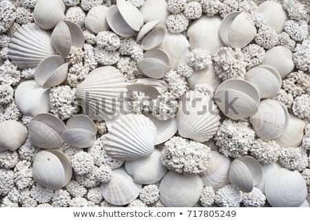 Plaj doku okyanus kabuk Stok fotoğraf © saje
