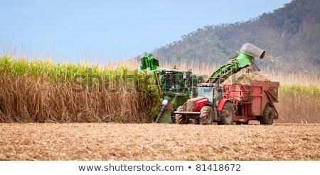 Australian agriculture sugarcane harvesting Stock photo © byjenjen