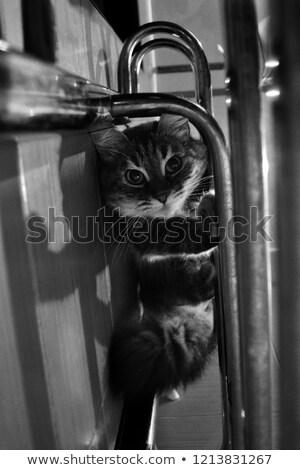 Expressive Mädchen grau Pelzmantel Frau Hände Stock foto © acidgrey