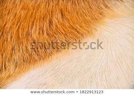 ストックフォト: Goatskin Detail
