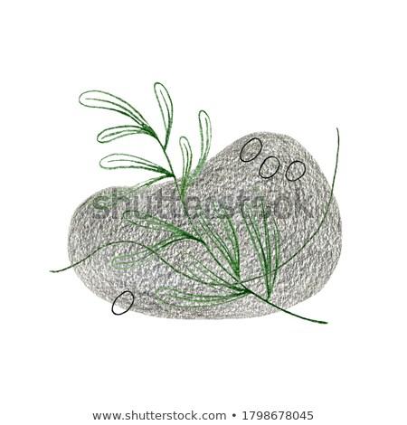 Stockfoto: Natuur · vierkante · gras · abstract · licht · groene