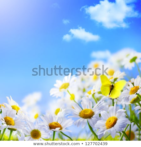 Abstract June plants and flowers background Stock photo © vavlt