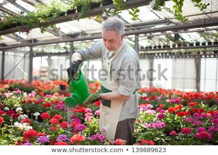 Retrato homem regador arte pintura Foto stock © zzve