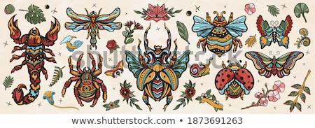 Beetle In School Stock photo © derocz