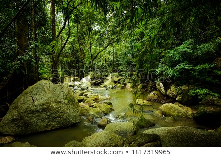потока пышный леса пород зеленый Сток-фото © jrstock