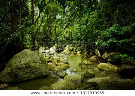 stream flowing through lush rainforest stock photo © jrstock