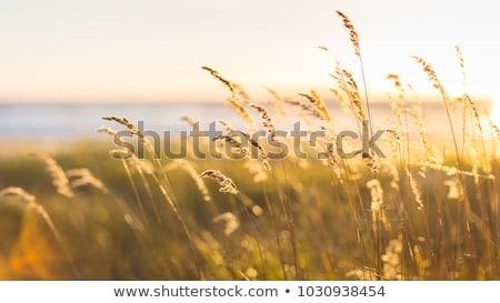 закат · солнце · Размышления · морем · цветами - Сток-фото © hd_premium_shots